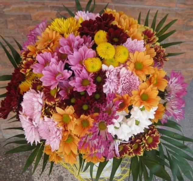 Buchet 21 crizantema multicolore preț 155