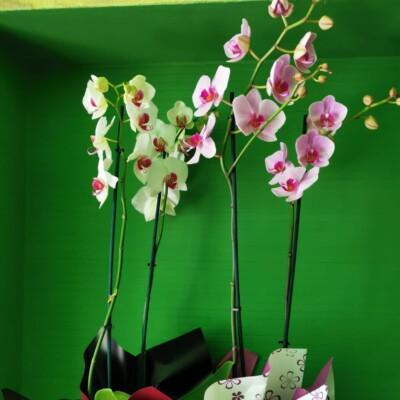 Plante Tulcea (1)