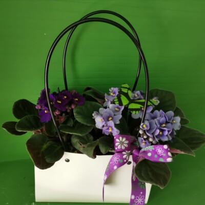 Plante Tulcea (2)
