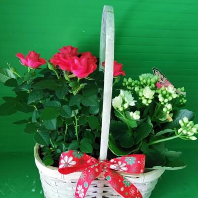 Plante Tulcea (4)