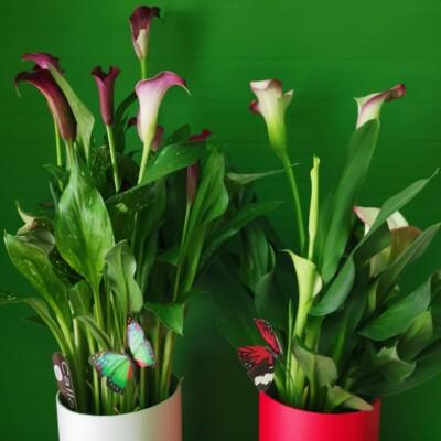 Plante Tulcea (7)